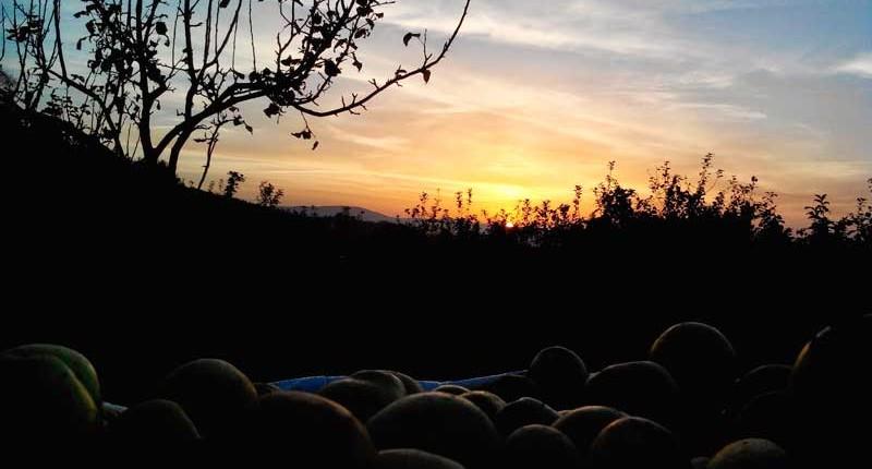 Puesta de sol en fincas Lagar de Ribela